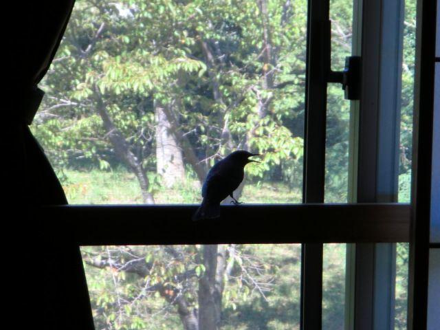 幸せの青い鳥かしら!?