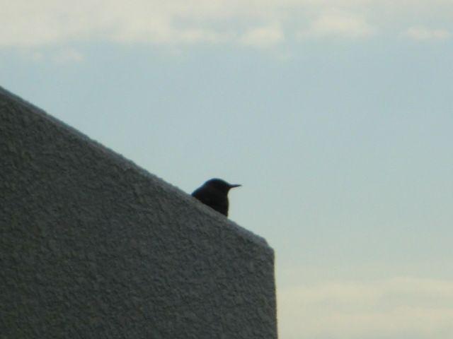 寒空に小鳥が