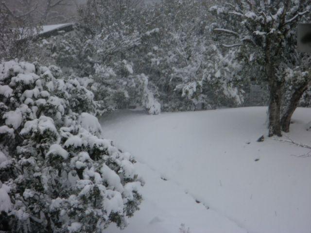 大雪でした・・・