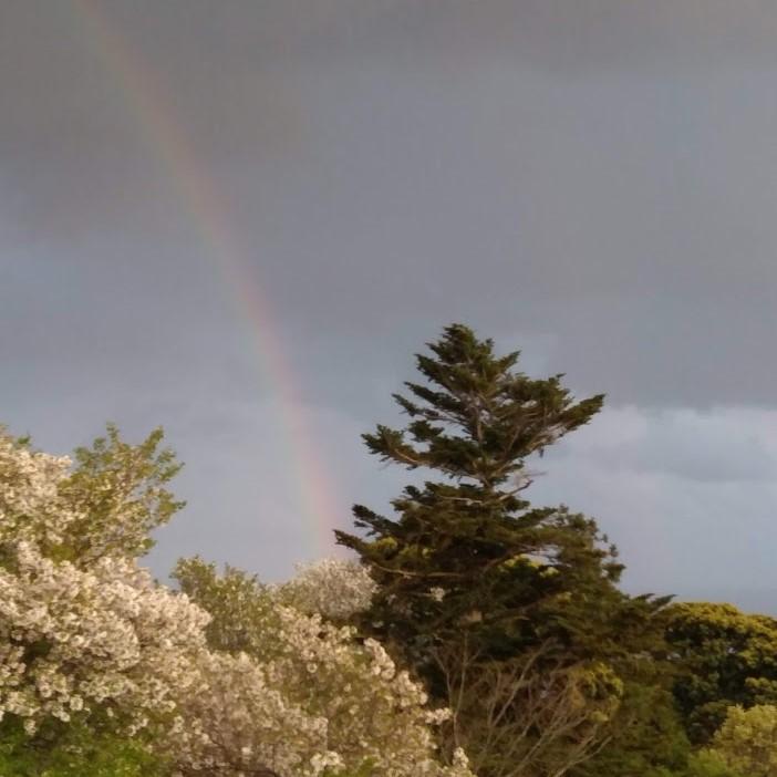 虹がでました!